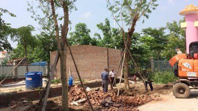 Công ty chăm sóc cây xanh uy tín chất lượng